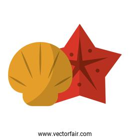 Shell and sea star cartoons isolated