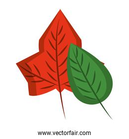 Autumn leaves nature cartoon isolated symbol