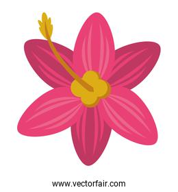 tropical flower icon cartoon isolated