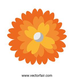 Flower with petal round symbol isolated
