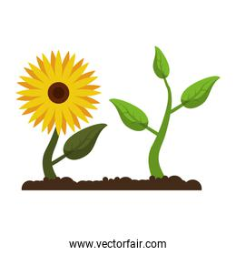 sunflower with plant growing cartoon