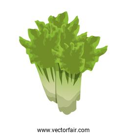 healthy vegetable icon