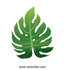 green textured leaf icon image