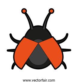 bug insect icon image