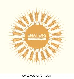 Wheat ears design, farm and agriculture concept, ve