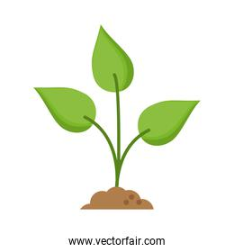 Isolated leaves and nature plant design