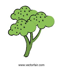 drawing broccoli vegetable diet nutrition