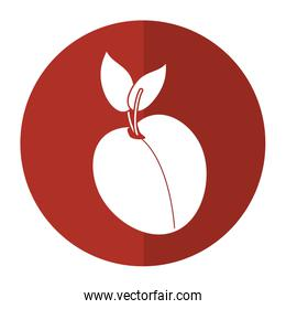 apricot fruit nutrition icon shadow