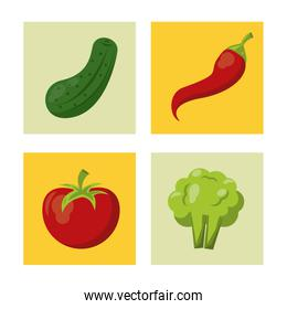 white background with colorful squares with cucumber and chilli and tomato and broccoli