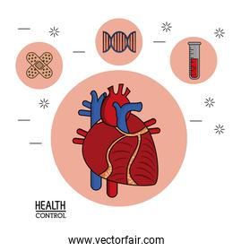 colorful Poster in white background with human heart system in closeup and silhouette icons of health control on top
