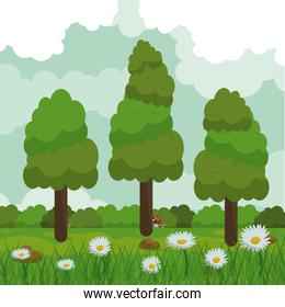 colorful background of field with daisy flowers and forest landscape