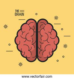 colorful poster the brain top view of its two hemispheres in yellow background