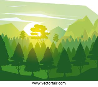 colorful background with landscape of pine trees in dawn