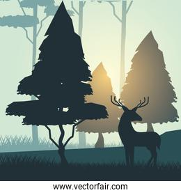 colorful background with sunrise landscape of forest with trees and deer