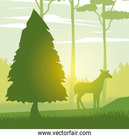 colorful background with sunrise landscape with deer in forest