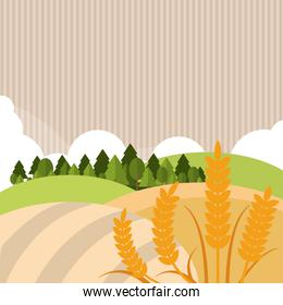 Wheat icon. landscape design. Agriculture concept