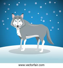 wolf over background image