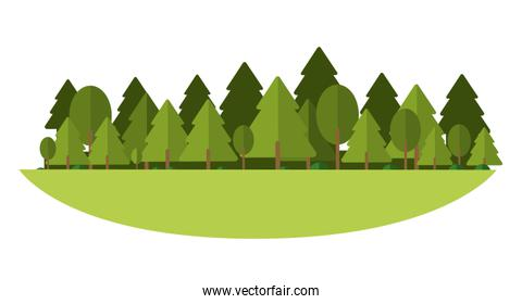 Forest and trees