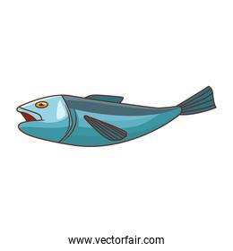Fish seafood isolated