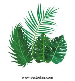 Tropical leaves over white