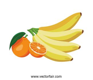 banana and orange colorful in white background