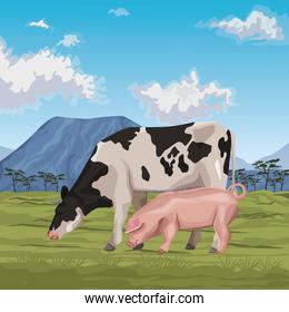 cow with pig