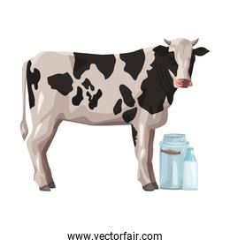 cow with milk can and bottle