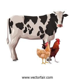 cow with hen and rooster