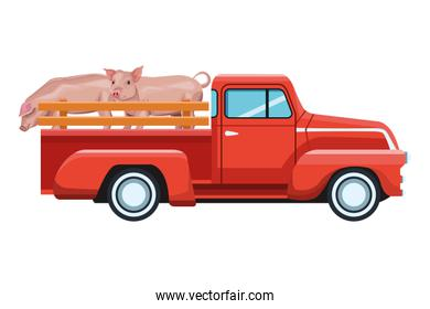 truck and pig isolated icon