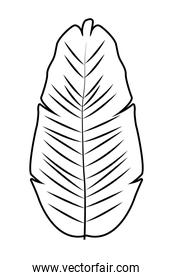 Tropical palm leaf nature cartoon in black and white
