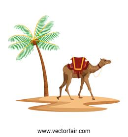 palm and camel icon cartoon