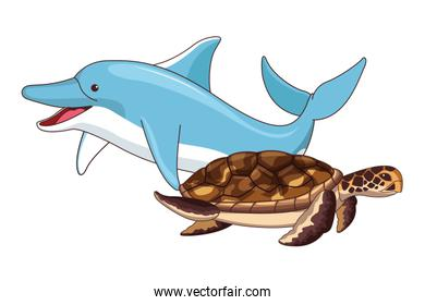 dolphin and turtle swimming together