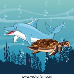 dolphin and turtle swimming together in the sea