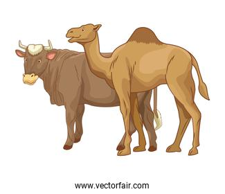 Cow and camel animals cartoon isolated