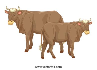 Two cows animals cartoons isolated