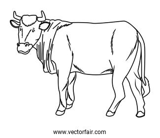 Cow animal sideview cartoon isolated in black and white