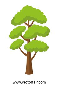 Tree with leaves nature cartoon