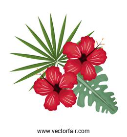 hibiscus flower tropical image