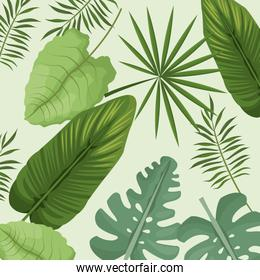 collection palm leaves natural