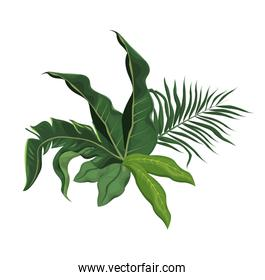 tropical leave palm tree image