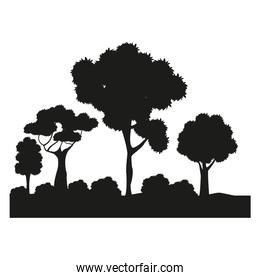 silhouette tree different nature foliage