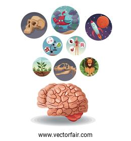 color circular icons with picture world evolution inside with above brain