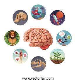 color circular icons with picture world evolution inside around to brain