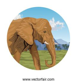 circular frame with colorful scene african landscape with elephant closeup
