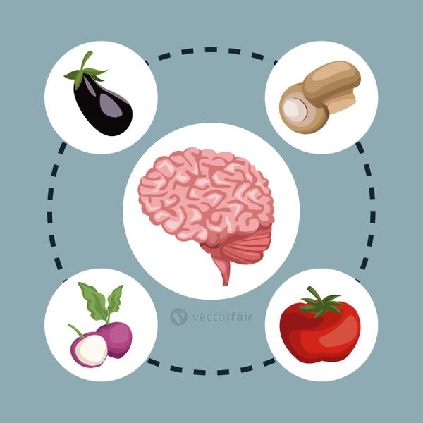 color background circular frame with brain organ and set vegetables healthy food around
