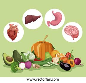 color background with vegetables and fruits healthy food set and circular frame organs human body