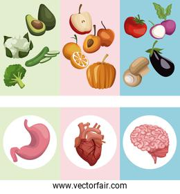 color banner poster vegetables and fruits with organs human body