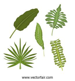 white background with set types of tropical leaves