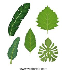 white background with set of green leaves