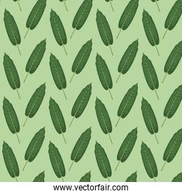 pattern color set decorative of elongated green leaves